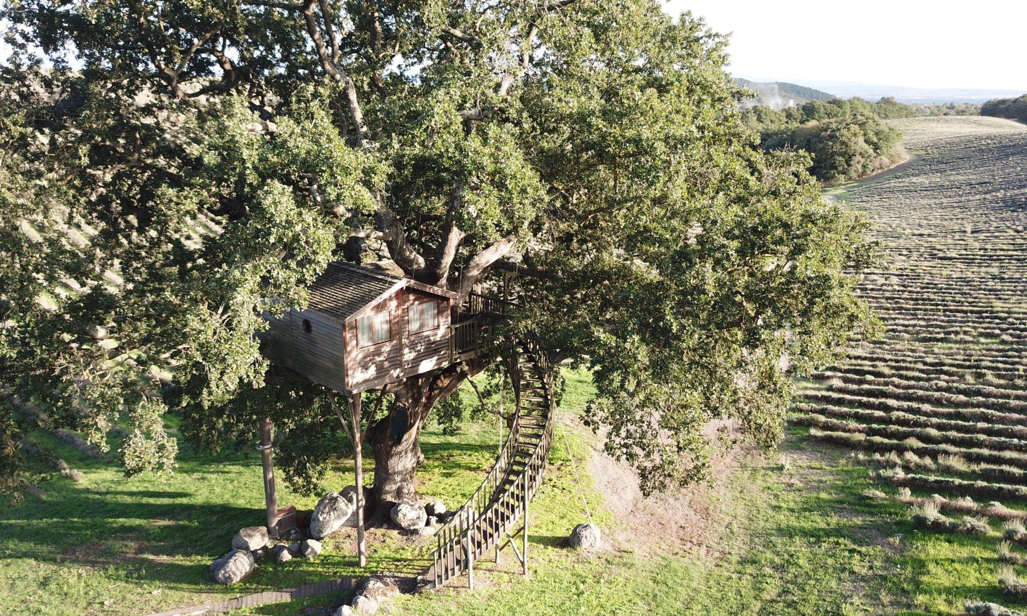 La Piantata casa albero